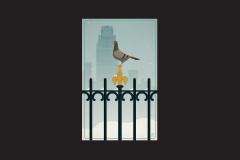 pigeon of bryant park